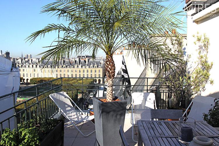 terrasse et palmier c0439 mires paris. Black Bedroom Furniture Sets. Home Design Ideas