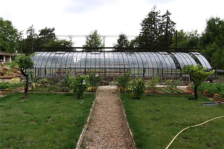 Greenhouse and vegetable garden. C0378