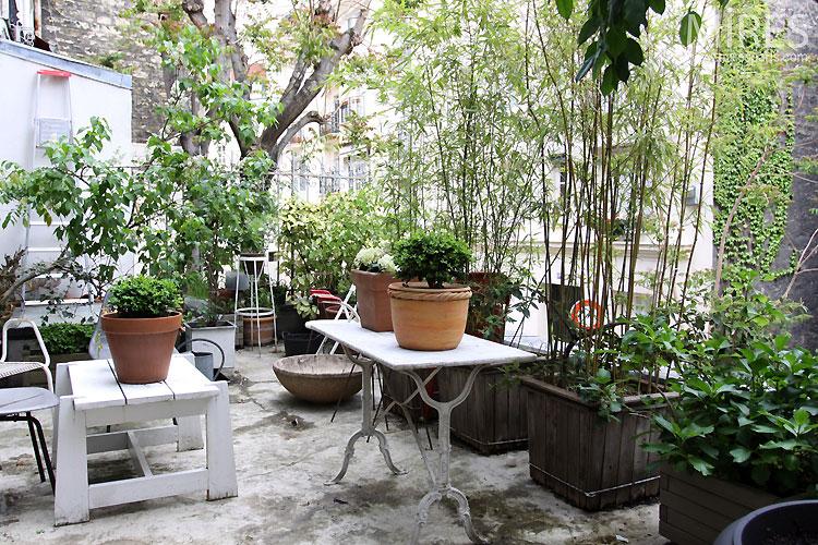 Terrasse v u00e9g u00e9tale C0341 Mires Paris