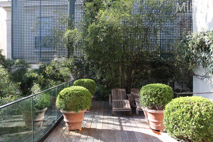 Intimité entre buis et bambous. C0705