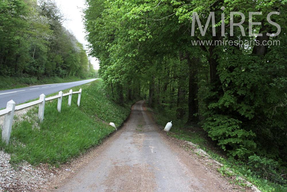 Chemin d'accès en sous-bois. C0870