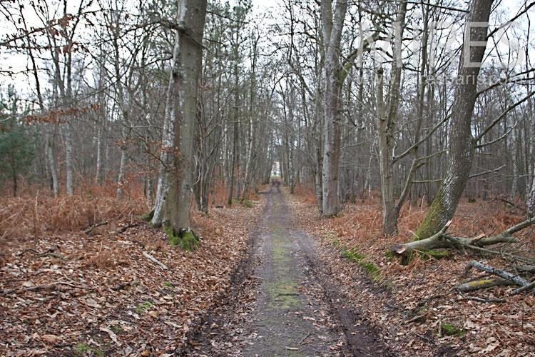 Dans les sous-bois d'automne. C0965