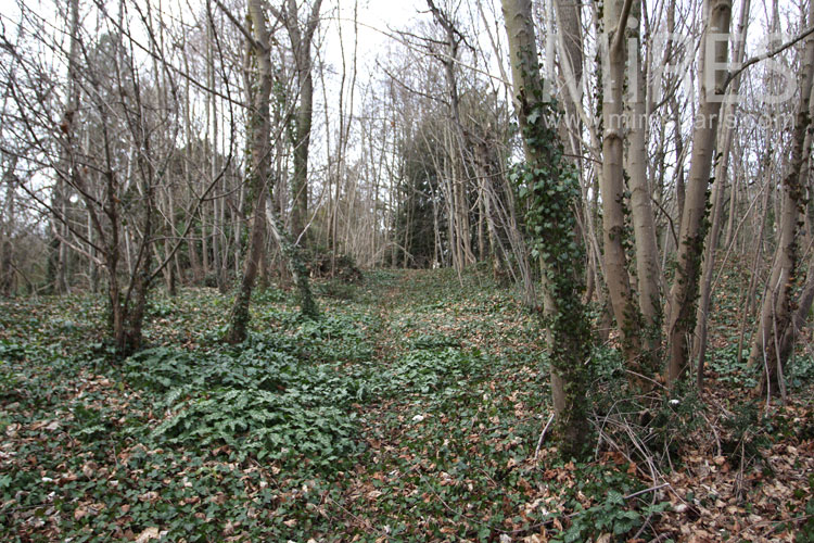 Forêt d'automne. C0985