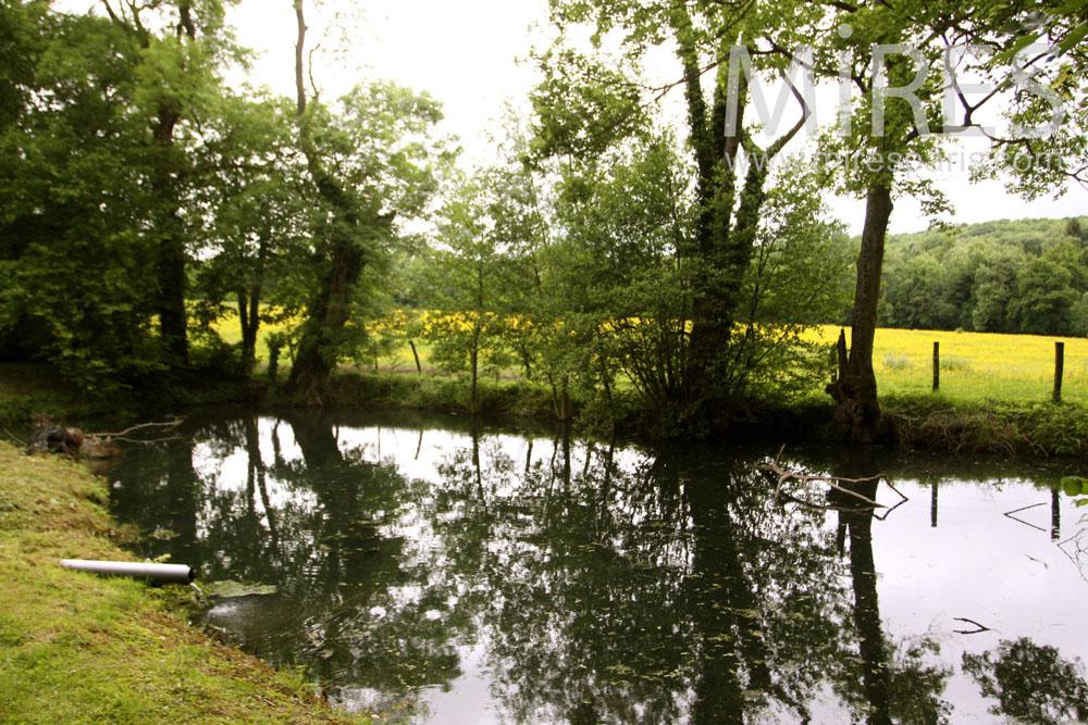 Petit étang sans baignade. C1028