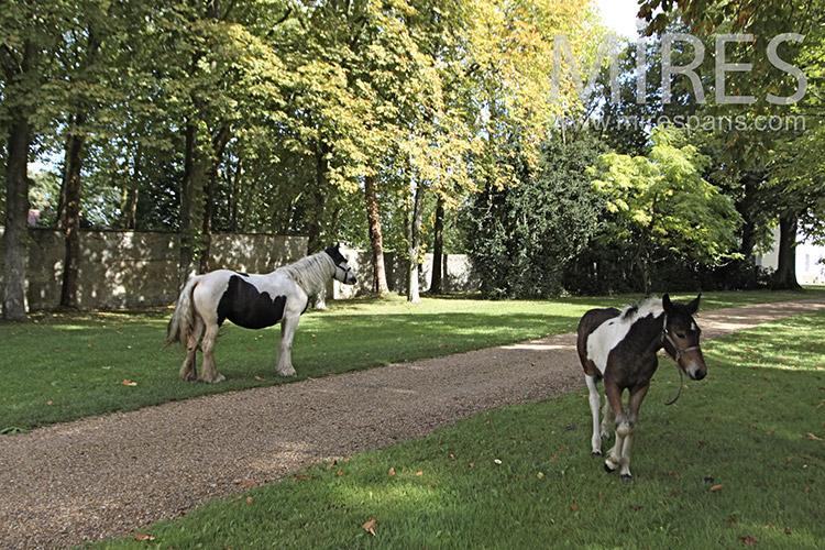 Parc, chevaux et moutons. C1242