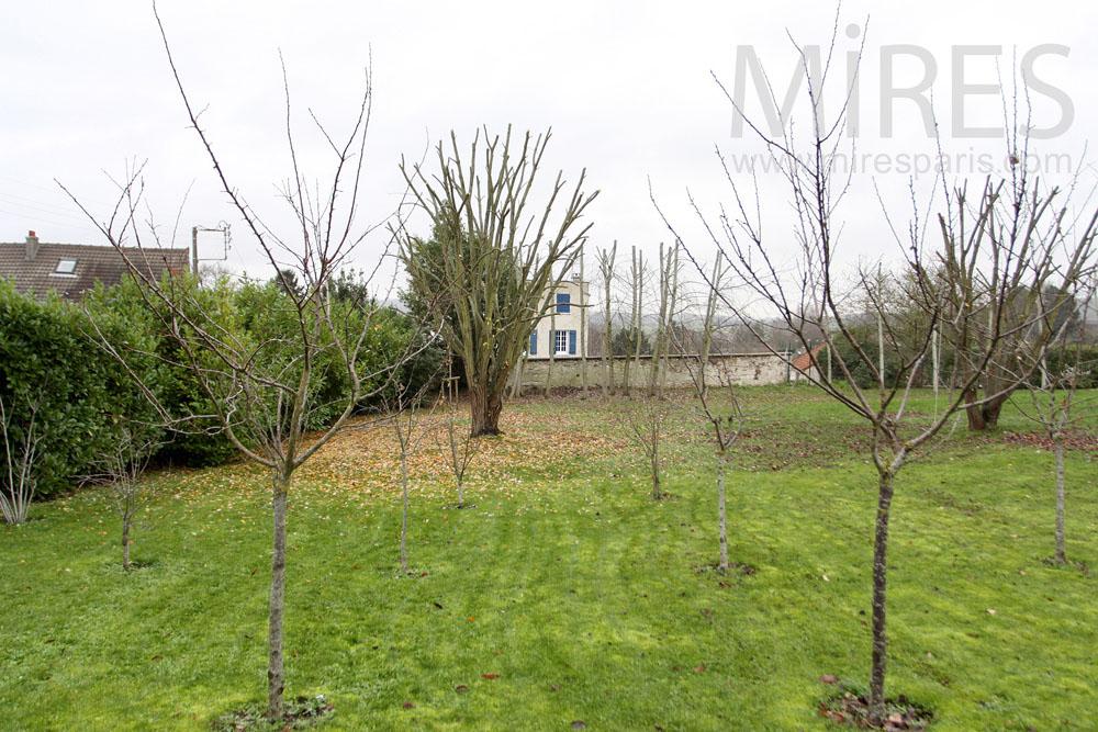 Orchard's garden. C1284