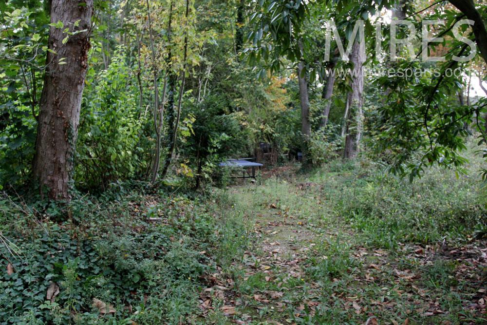 Wild garden. C1390