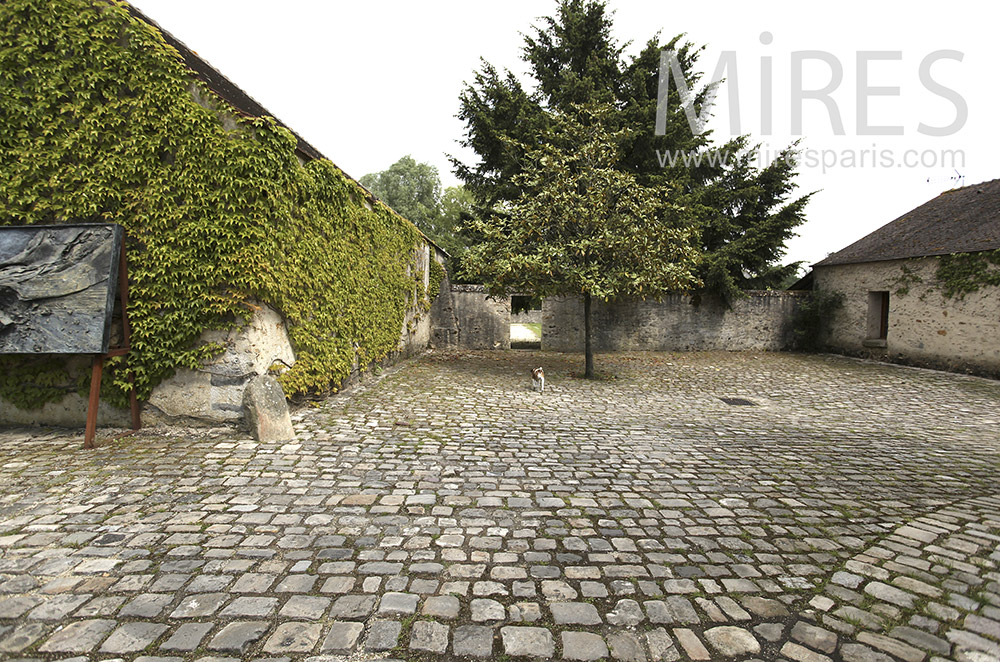 Paved courtyard and climbing ivy. C1565