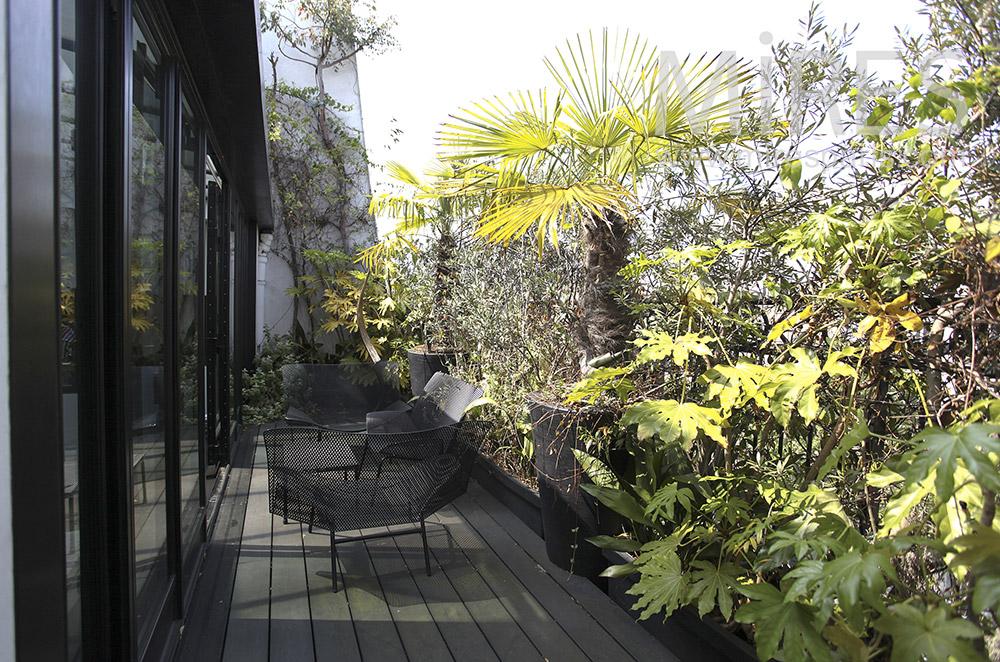 Terrasse et plantes. C1569