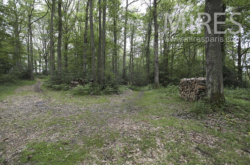 Chemin de sous-bois. C1570