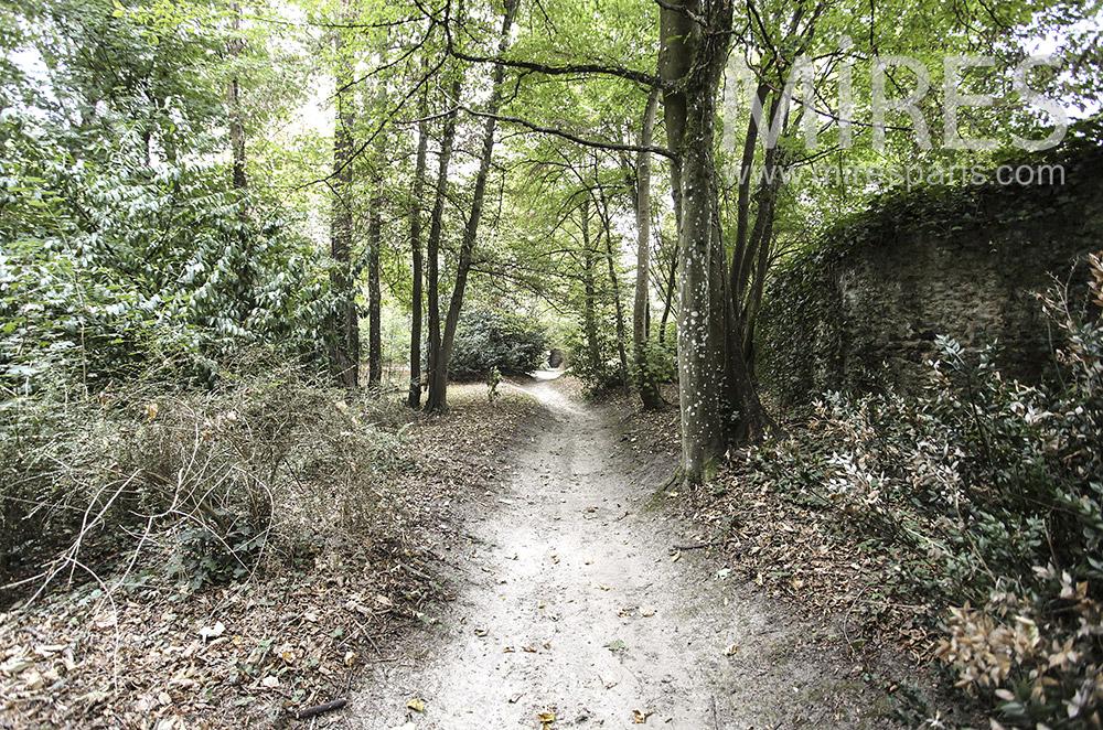 Forest walk. C1593