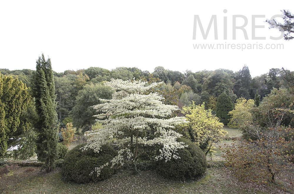Jardin et forêt. C1604