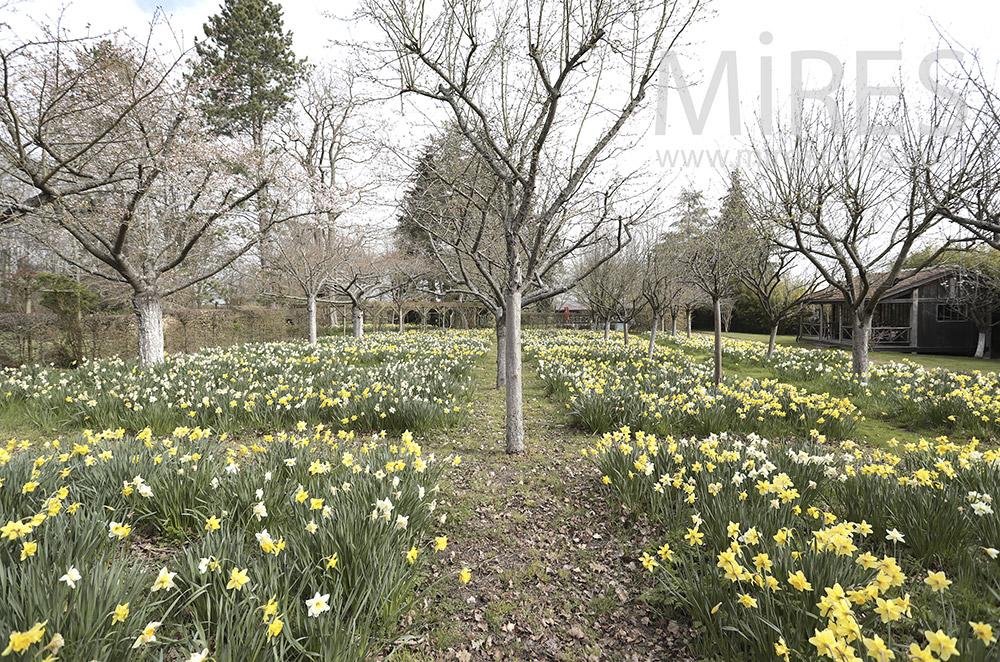 Jardin fleuri. C1685