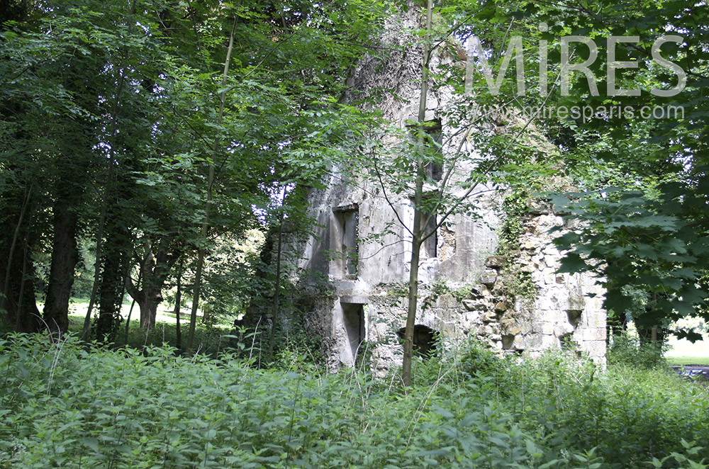 Ruin in the forest. C0071