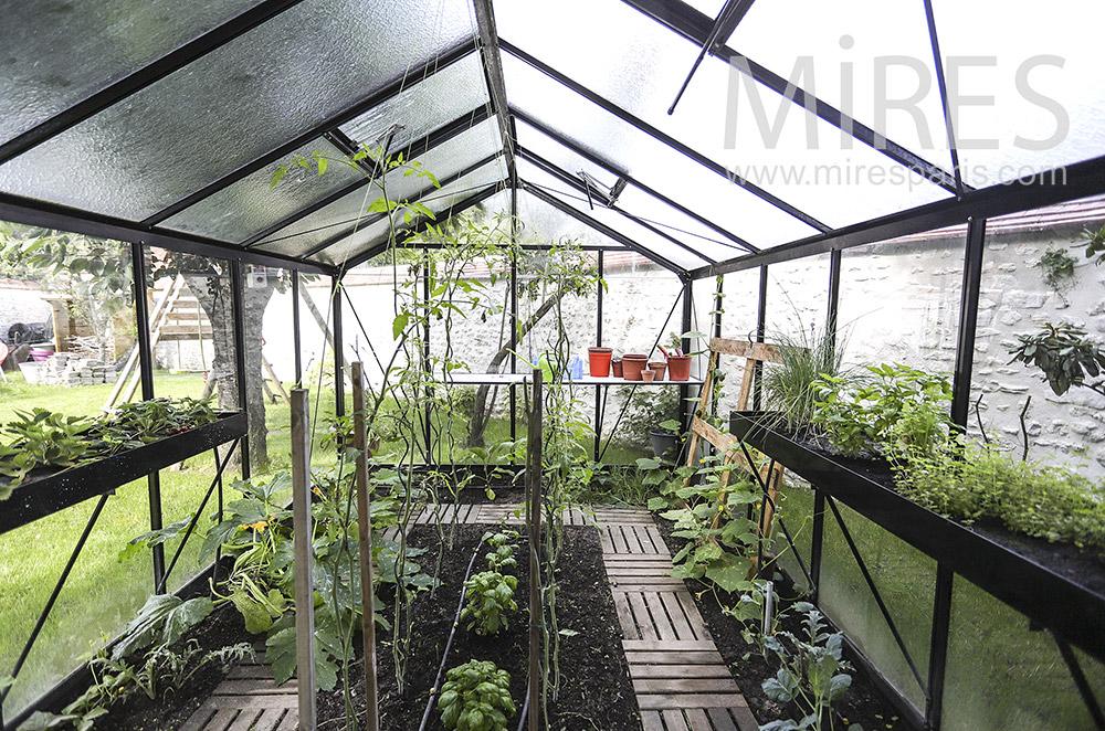 Vegetable garden in greenhouses. C1932